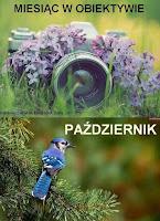 http://misiowyzakatek.blogspot.com/2016/10/miesiac-w-obiektywie-pazdziernik.html