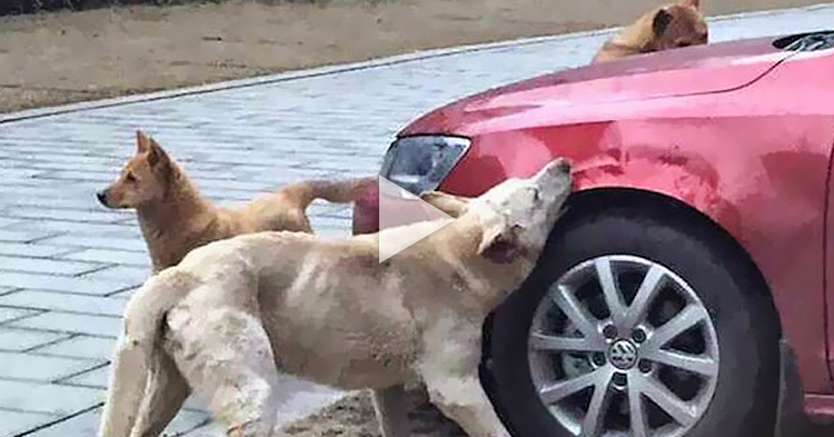 Driver kicked a dog, received bites of revenge from the group