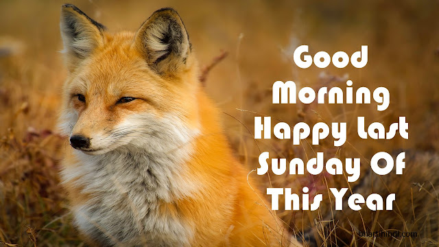 Happy Last Sunday Of The Year Image Animal Image