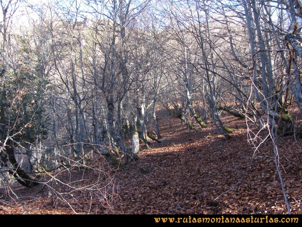 Pico Mosquito desde Tarna: Bosque de hayas