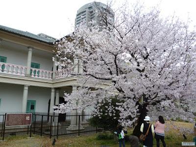 泉布観と桜