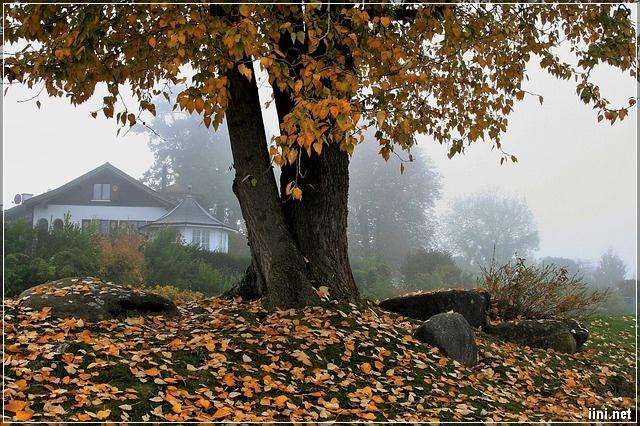 status tháng 9 mùa thu