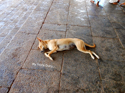 Dog sleeping at the Shree Muthappan Temple, Parassinikadavu, Kannur