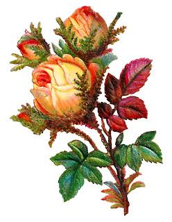 rose flower clip art digital botanical crafting scrapbooking
