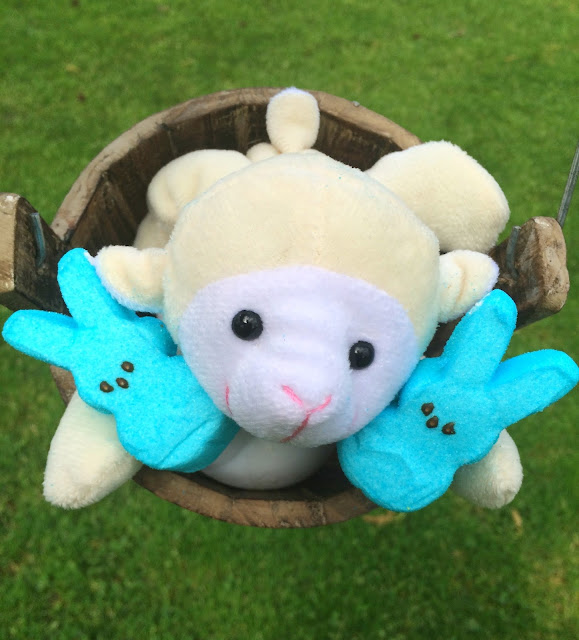Peeps with sheep - Fun ideas to give Peeps | www.jacolynmurphy.com