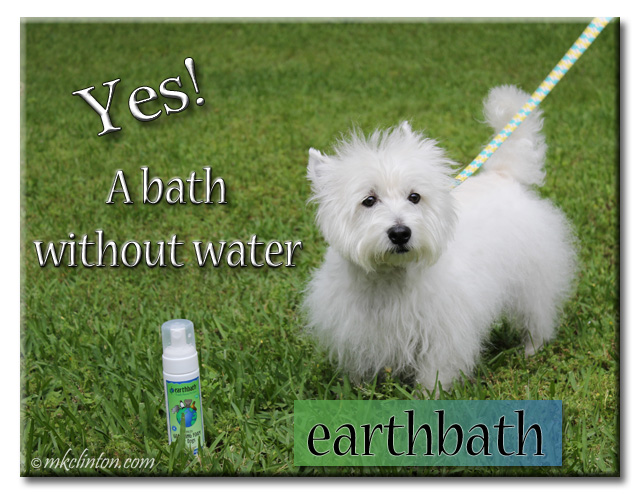 "Westie meme, ""Yes! A bath without water"""