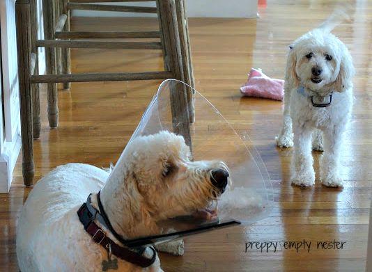 Dogs Drugs Amp A Delightful Evening Preppy Empty Nester F