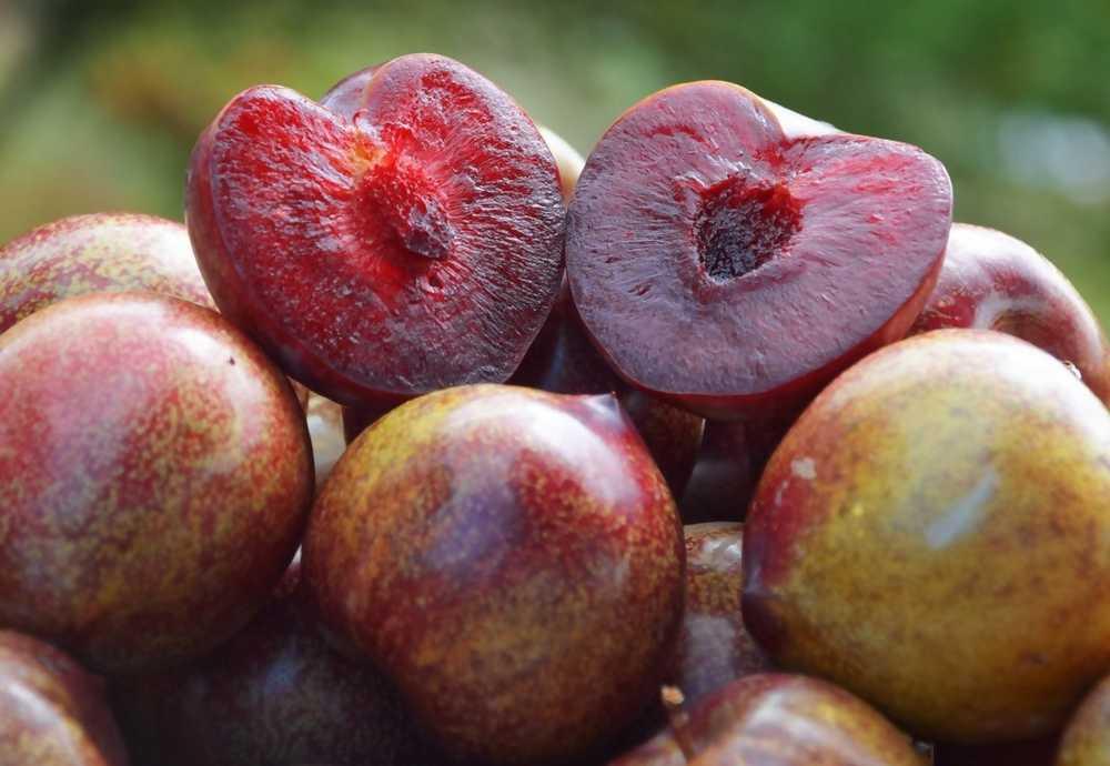 Buah Plum Untuk Diet (fruitlogistica.com)