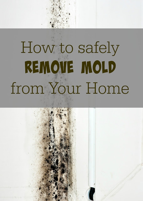 How to Safely Get Rid of Mold in Your Home