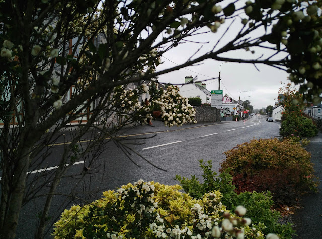 view of Moycullen through some greenery