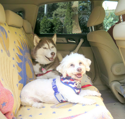 Keep dogs safe riding in the car with a dog car safety harness. Pet safety, Dog safety, car safety for dogs