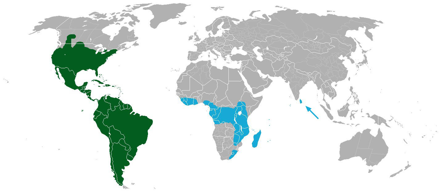 World distribution of cacti