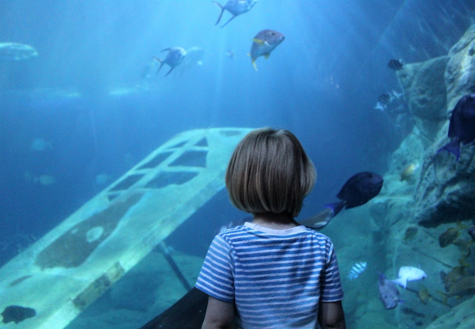 Our Day At National Marine Aquarium Plymouth Devon Days Out