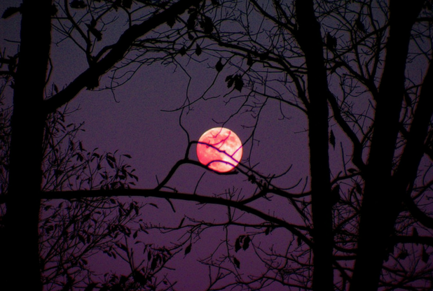 Hoy la luna será rosada y se podrá observar desde cualquier parte del planeta