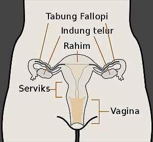Alat Reproduksi Tubuh Wanita Beserta Manfaatnya