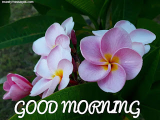 good morning flower