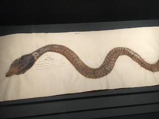 大英自然史博物館展①