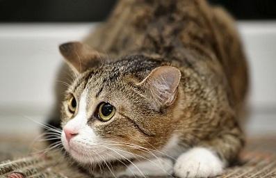 Cara Menyembuhkan Kucing Mencret Dengan Benar