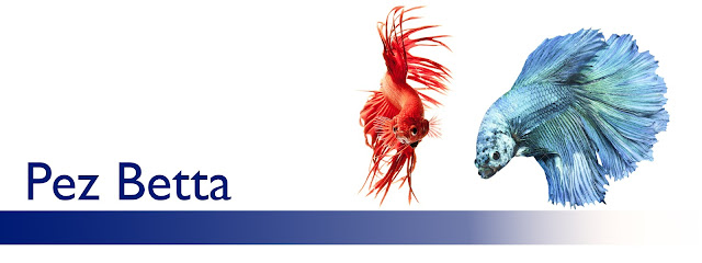 http://www.acuarioamazonic.com/2017/08/pez-betta.html