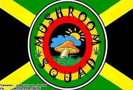 Download Lagu Reggae Band Mushroom Squad