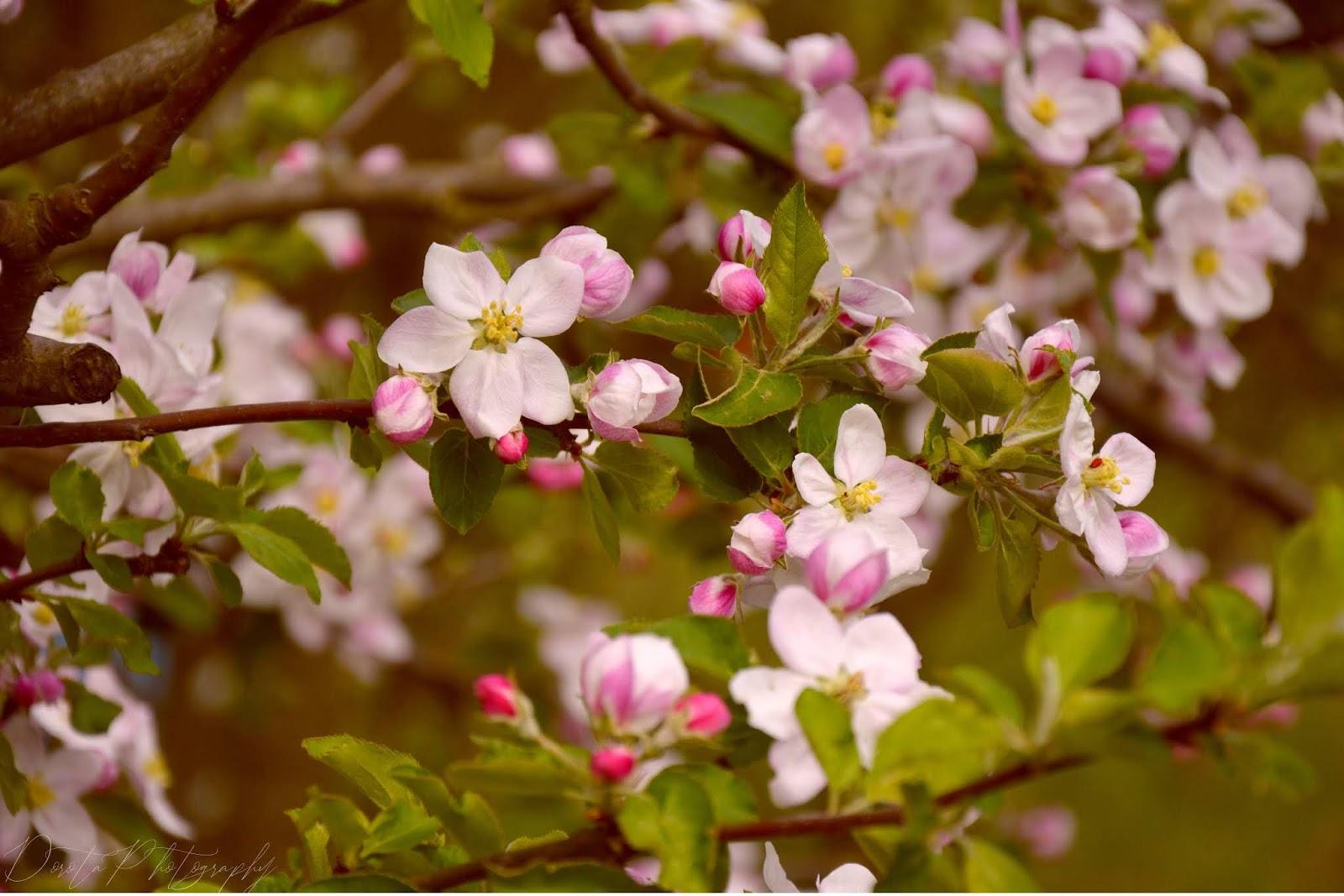 kwiaty, wiosna, fotografia