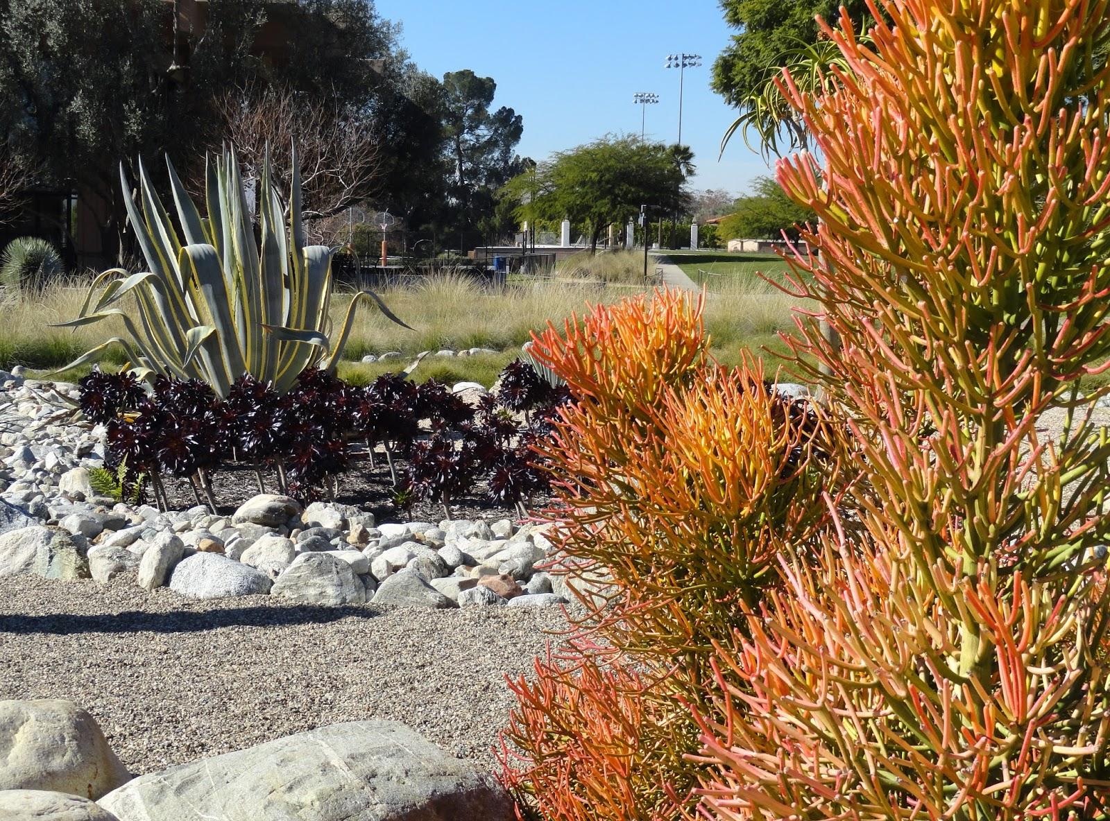 danger garden: Walking the Pitzer College Campus, part one...