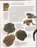ANFIBIOS PAG 14