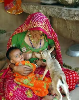 See A Town In India Where Animals Are Breastfeed Like Babies Because Women See Them As Children [See Photos]