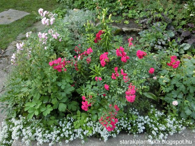 неприхотливый сад, легкий сад и розарий