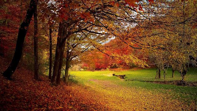 Park met bomen in oranje, gele en rode kleuren.