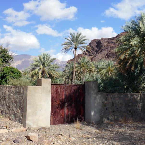 Wadi, Bergtal, Oase, Oman, Palmen, Dorf, Tal, Berge