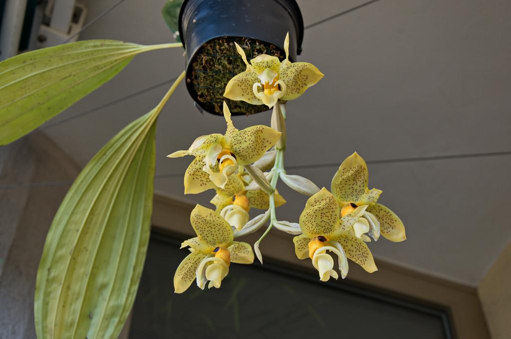 Букеты, купить цветы орхидею в красноярске