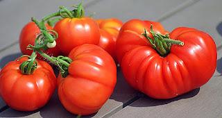 http://tomatprat.blogspot.no/2015/08/costoluto-fiorentino-tomat.html