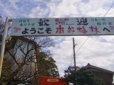 【和歌山県】日本一の梅の里・南部(みなべ)梅林