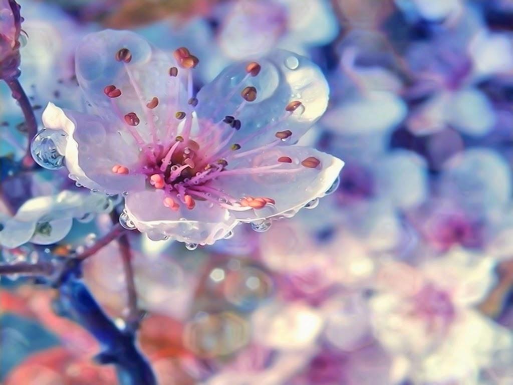 ВедаМост: Весна пришла! Порадуемся ей!
