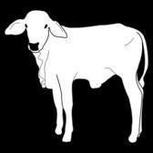 exame-clinico-respiratorio-bezerros-bovinos-exam-calf-calves-desenho-linear-vetarq-pdf