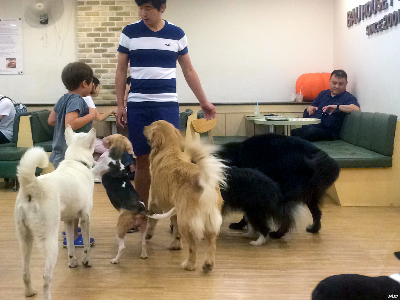Seoul, Korea - Summer Study Abroad 2014 - Bauhaus Dog Cafe