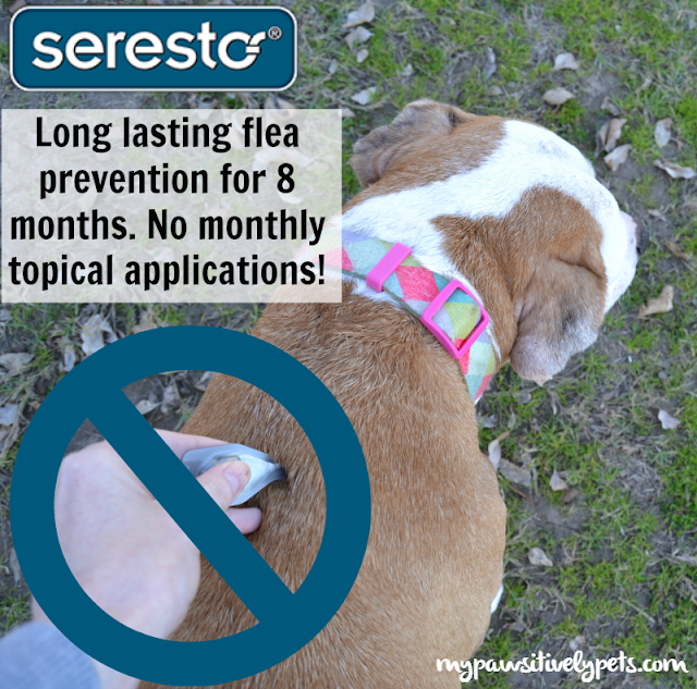 Seresto offers flea and tick prevention for 8 months - no need for monthly topical applications! #petbasics