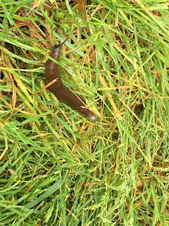 Slug, France, Lyon, bugs