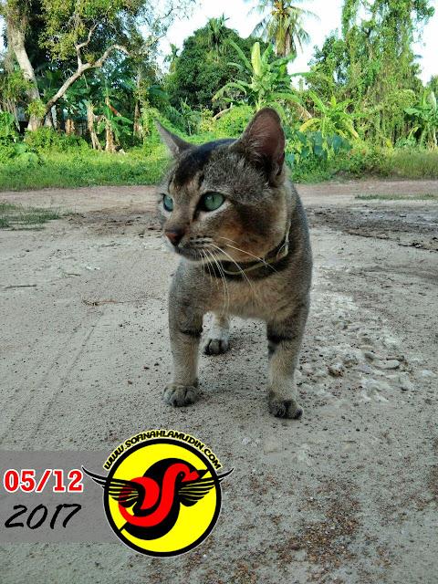 Kucing Lucu Nak Menyamar