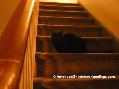 "The cat who witnessed the ""ghost"" sitting in the same relative spot where she was sitting when the event occurred"