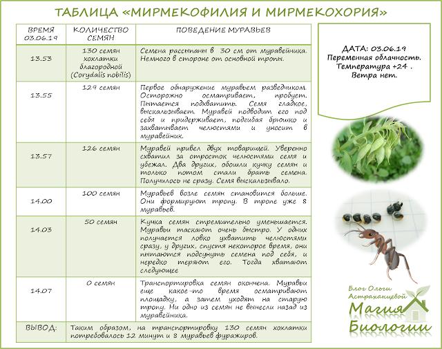 мирмекохория-мирмекофилия-муравьи-семена-эксперимент