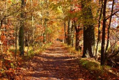 Top Ten Autumn Quotations