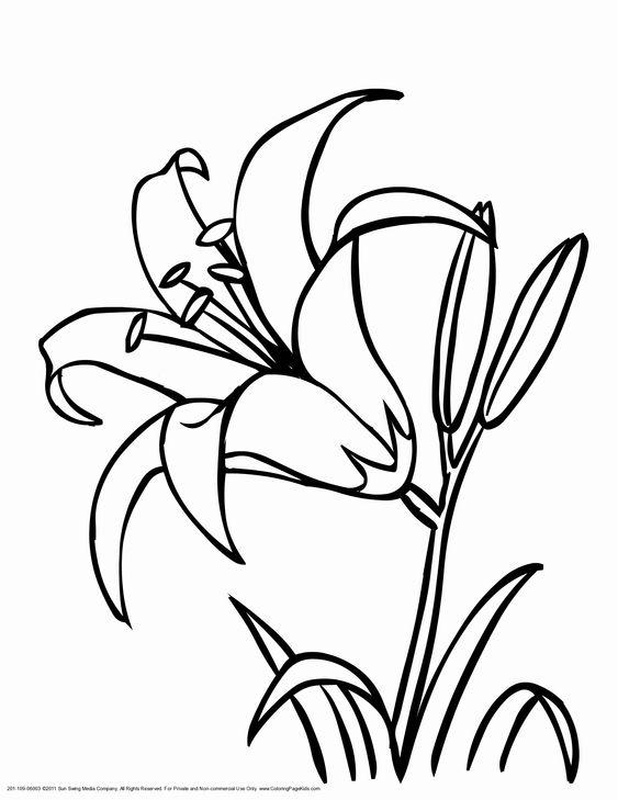 Tranh tô màu bông hoa ly
