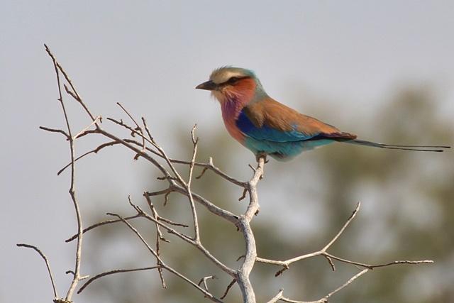 Aves en Kruger