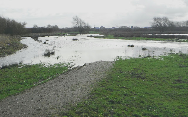 Doxey Marshes in flood