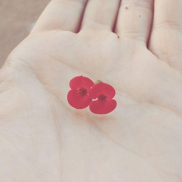 foto de florzinha, texto sobre a valorização das coisas corriqueiras