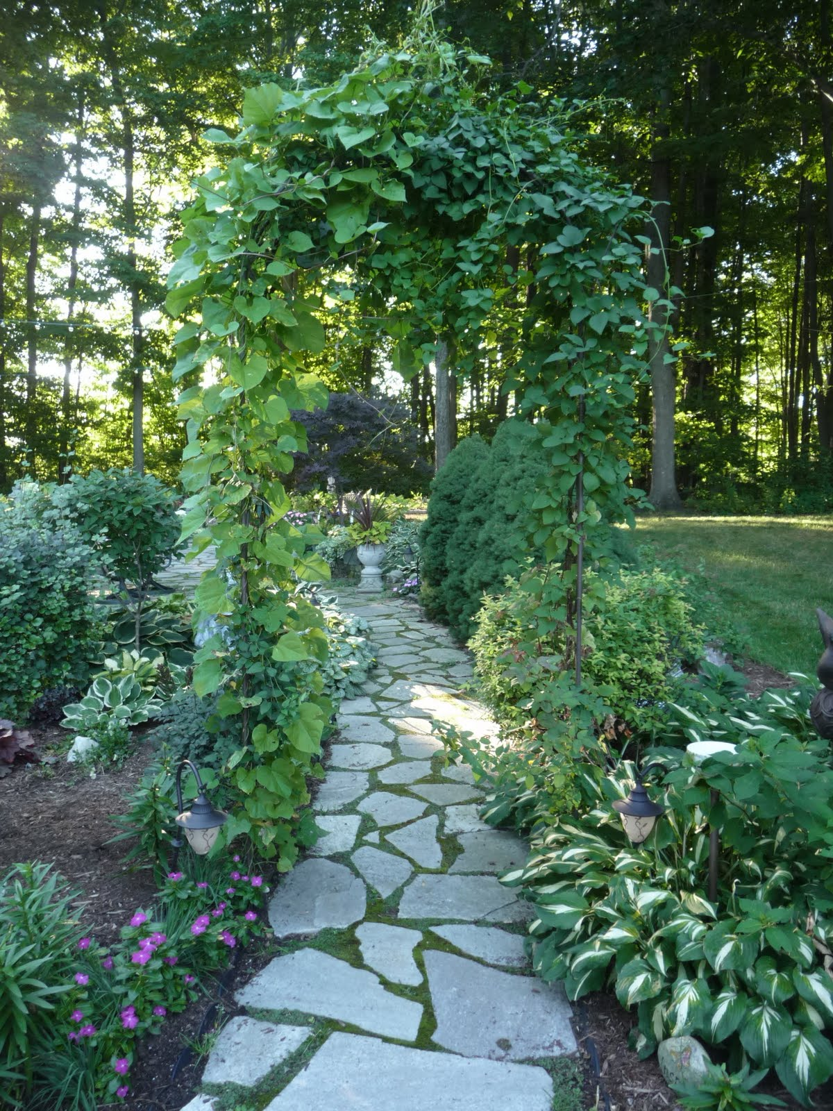 Home And Gardening With Liz It S All About The Hydrangeas