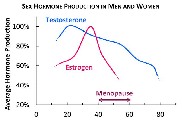 Perjalanan Hormon Estrogen Menjelang Menopouse