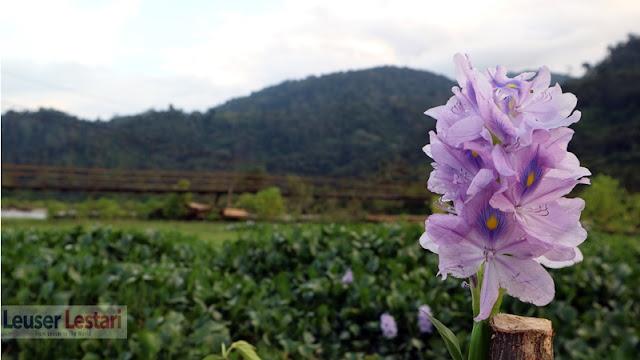 Agusen desa wisata di Aceh